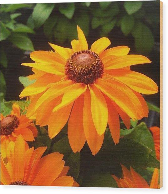 Beautiful Flower #iphone5 #instagram Wood Print
