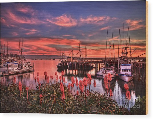 Beautiful Harbor Wood Print