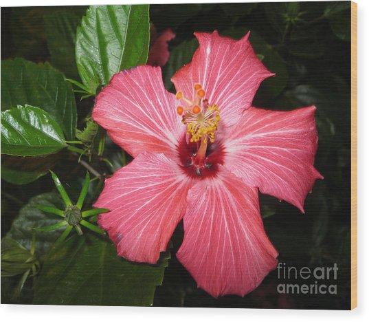 Beautiful Hibiscus Wood Print