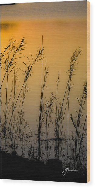 Beautiful Nature Wood Print