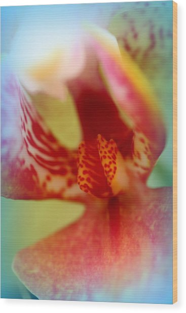 Beautiful Orchid Wood Print by Jacqui Collett