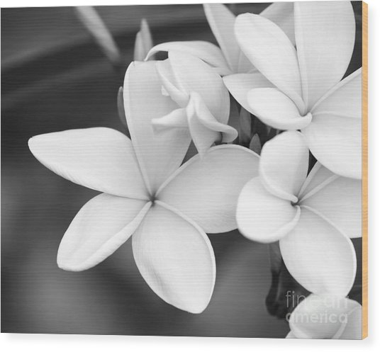 Beautiful Plumeria In Black And White Wood Print