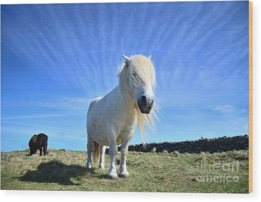 Beautiful Poney Grazing Near The Lizard - Cornwall Wood Print by OUAP Photography