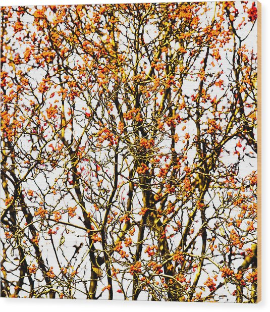 Beautiful Rowan 10 - Square Wood Print