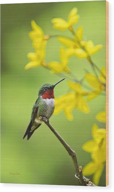 Beautiful Summer Hummer Wood Print