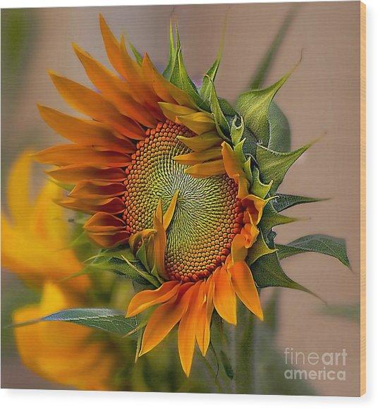 Beautiful Sunflower Wood Print
