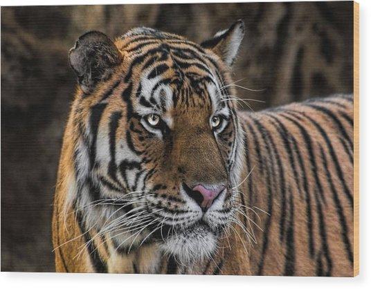Beautiful Tiger Photograph Wood Print