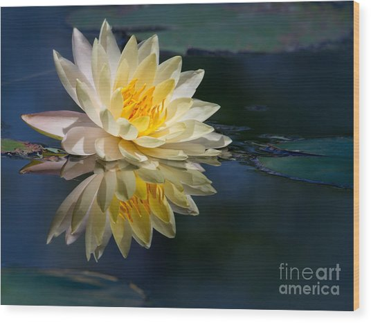 Beautiful Water Lily Reflection Wood Print