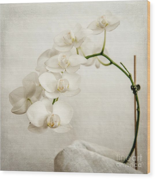 Beautiful White Orchid II Wood Print