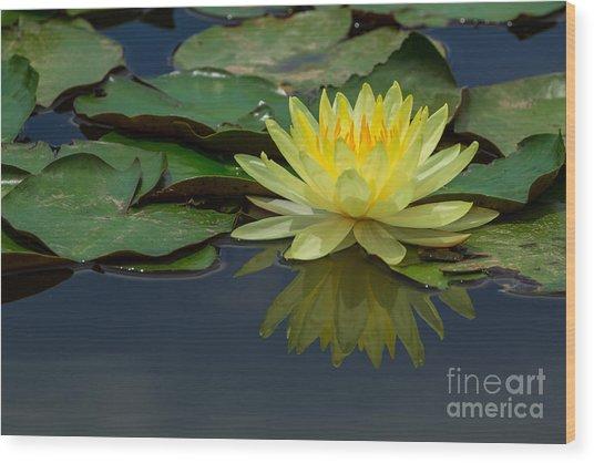 Beautiful Yellow Water Lily Wood Print