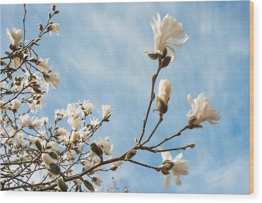 Beauty And Abundance Wood Print