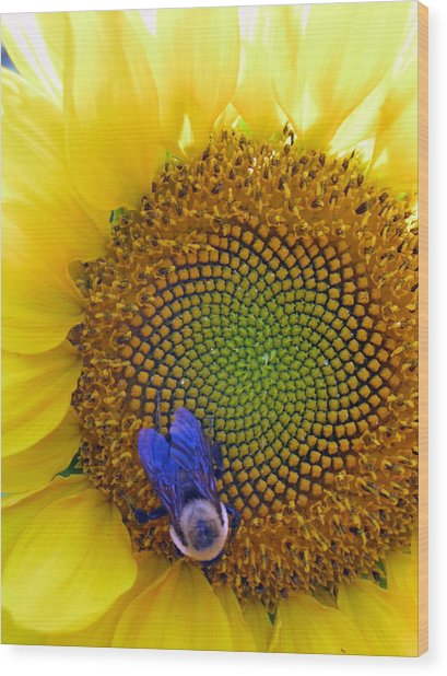 Beauty And The Bee Wood Print by Laura Corebello