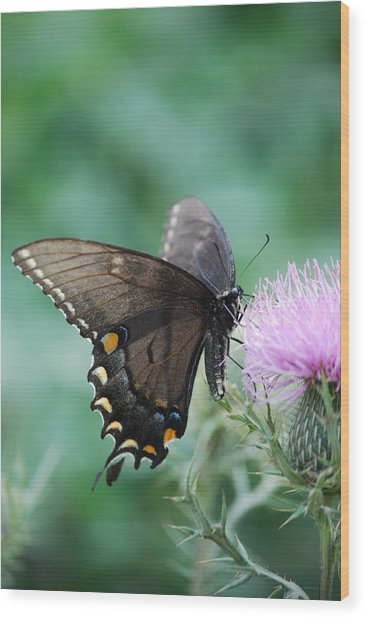 Beauty And Thistle Wood Print