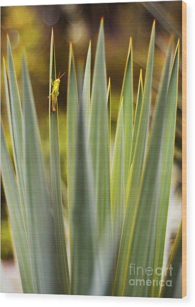 Beauty Grasshopper Wood Print