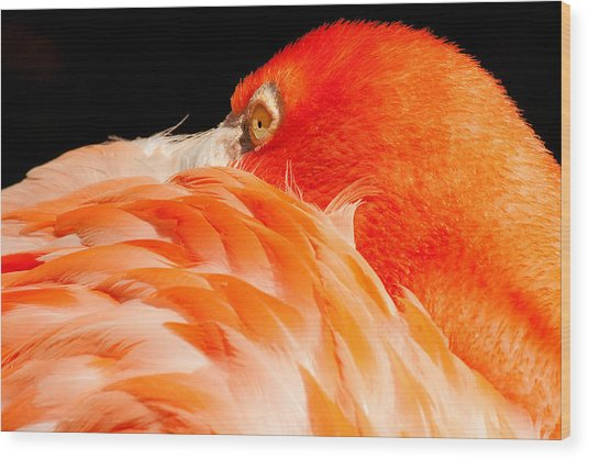 Beauty In Feathers Wood Print