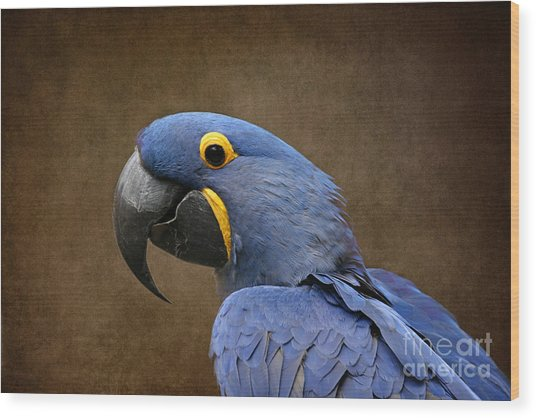 Beauty Is An Enchanted Soul - Hyacinth Macaw - Anodorhynchus Hyacinthinus Wood Print