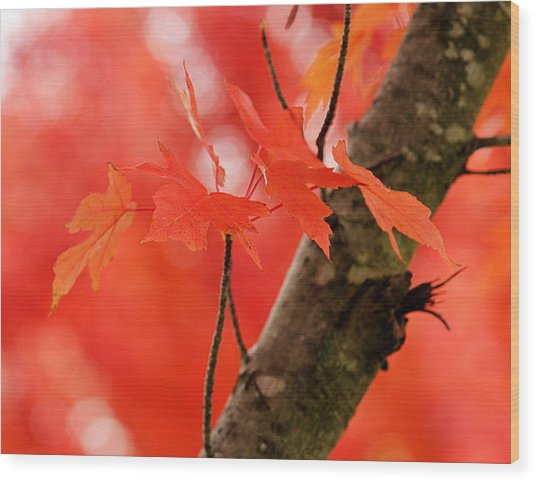 Wood Print featuring the photograph Beauty Of Red by Viviana  Nadowski