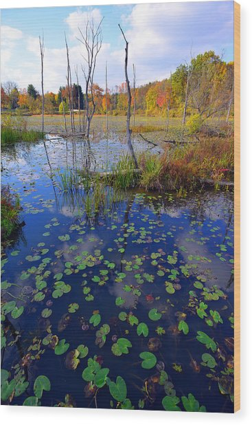 Beaver Marsh In Autumn Wood Print