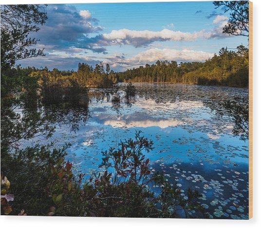 Beaver Pond - Pine Lands Nj Wood Print