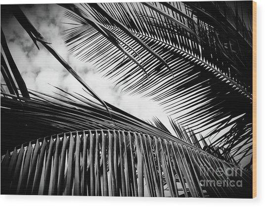 Wood Print featuring the photograph Maui Paradise Palms Hawaii Monochrome by Sharon Mau