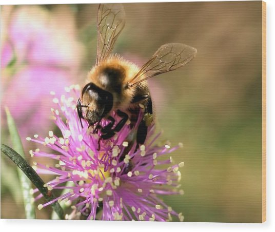 Bee And Blossom Wood Print