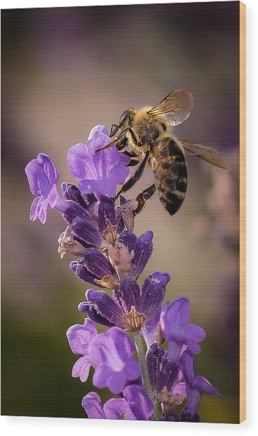 Honeybee Working Lavender Wood Print