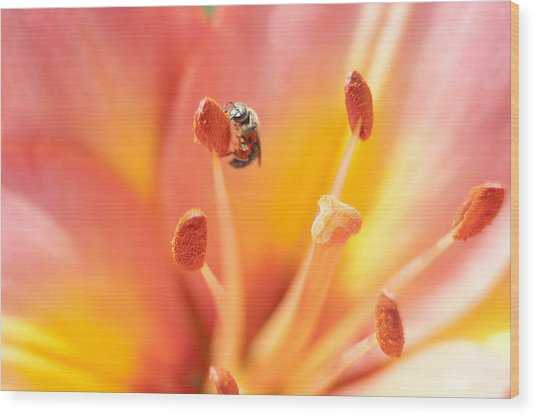 Bee And Lily Wood Print