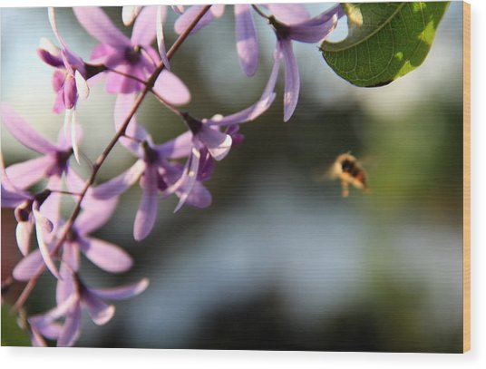 Bee Back Wood Print