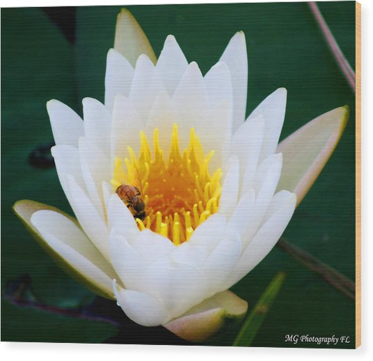 Bee In A Lily  Wood Print