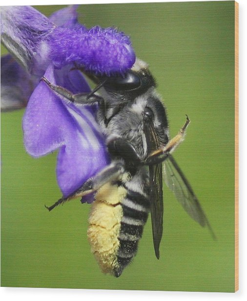 Bee-licious Flower Wood Print