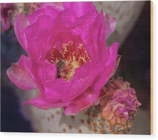 Bee On A Beavertail Wood Print