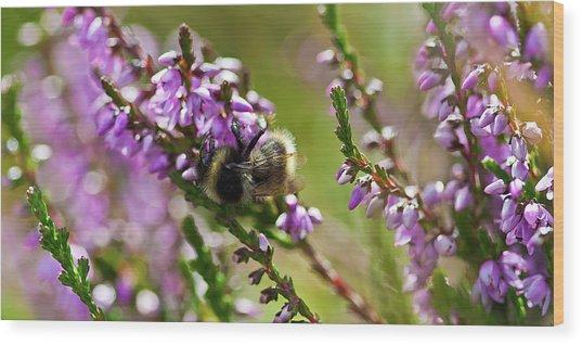 Bee On Heather Wood Print