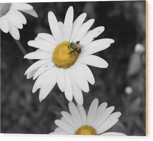 Bee On My Daisy Wood Print by Kimberly Elliott