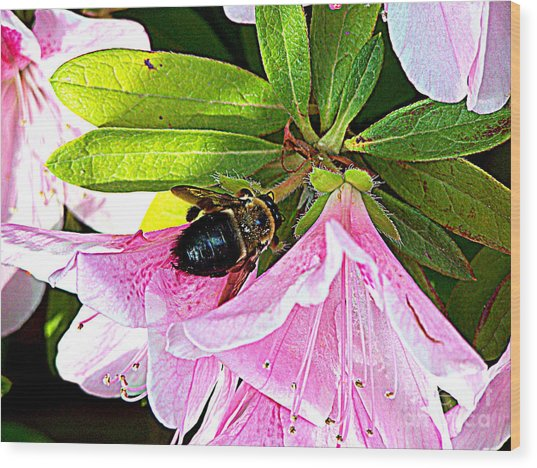 Bee On  Pink Azalea Wood Print