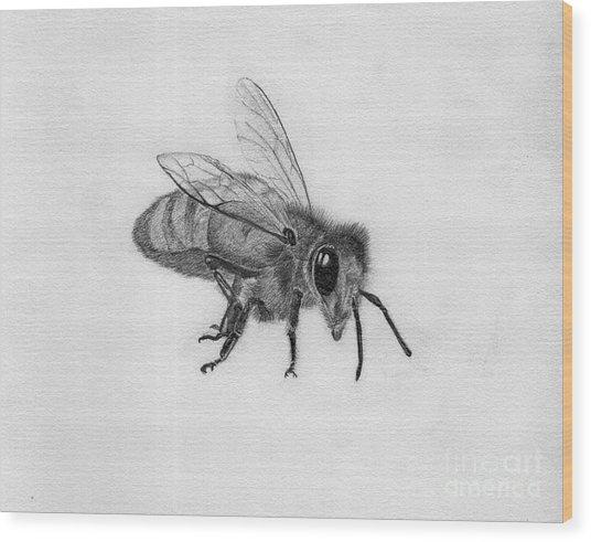 Bee Pencil Drawing Wood Print by Dan Julien