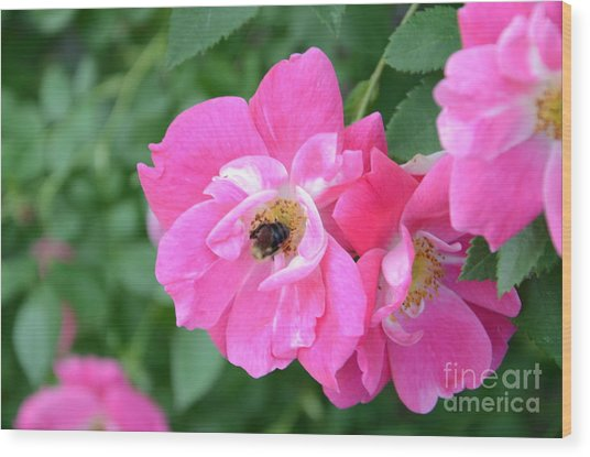 Bee Rosy Wood Print