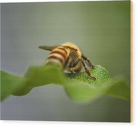 Bee Still Wood Print
