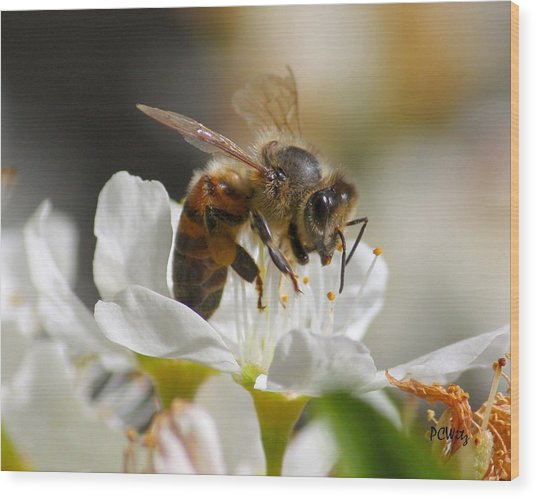 Bee4honey Wood Print
