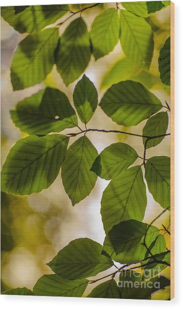 Beech Leaves And Bokeh Wood Print