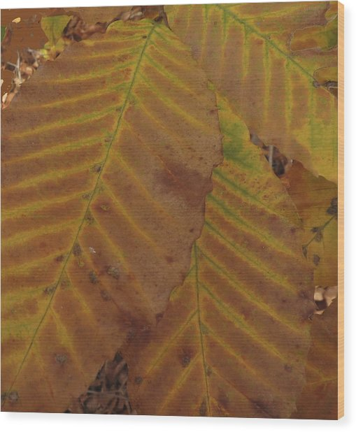 Beech Leaves Wood Print