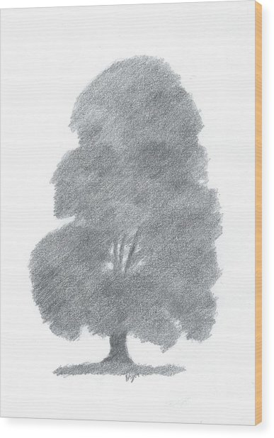 Beech Tree Drawing Number Four Wood Print by Alan Daysh