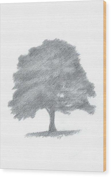 Beech Tree Drawing Number Three Wood Print by Alan Daysh