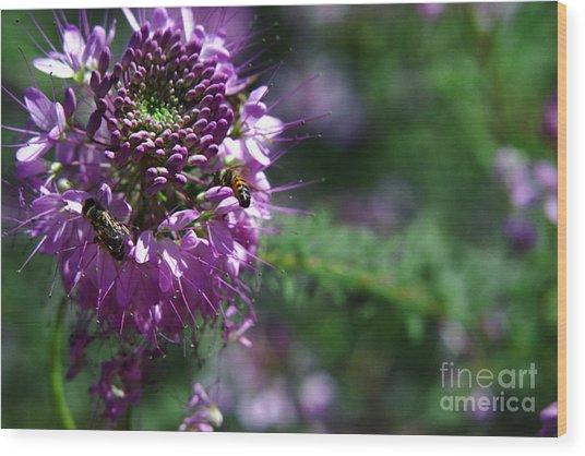 Bees In Purple Wood Print