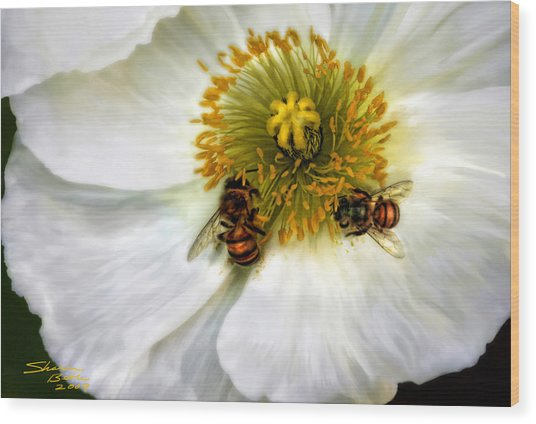 Bees On A Flower Wood Print