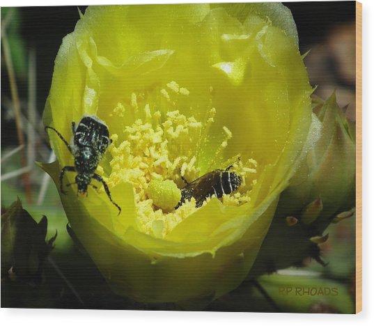 Pollinating Cacti Bloom Wood Print
