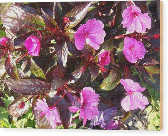 Begonias Wood Print by Van Ness