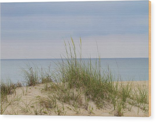 Behind The Dune Grasses 3 Wood Print