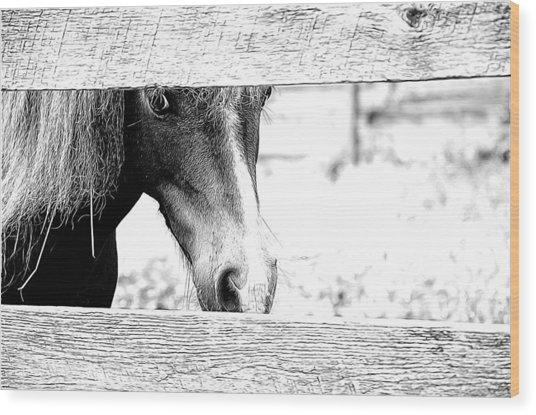 Behind The Fence Wood Print