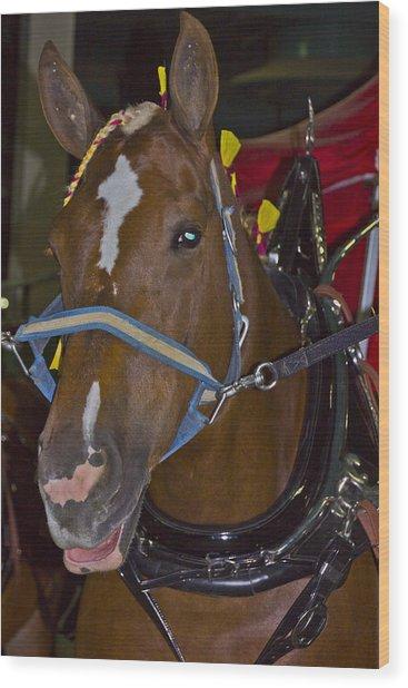 Belgian Draft Horse Wood Print