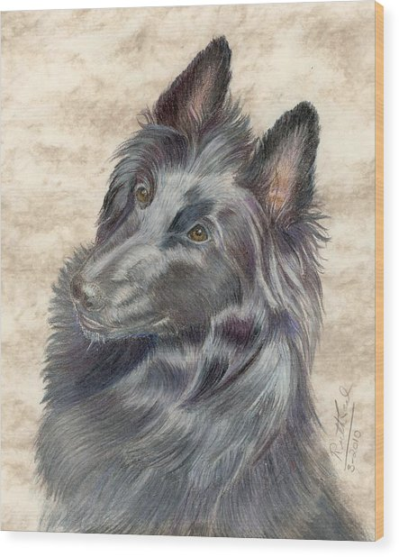 Belgian Sheepdog Wood Print